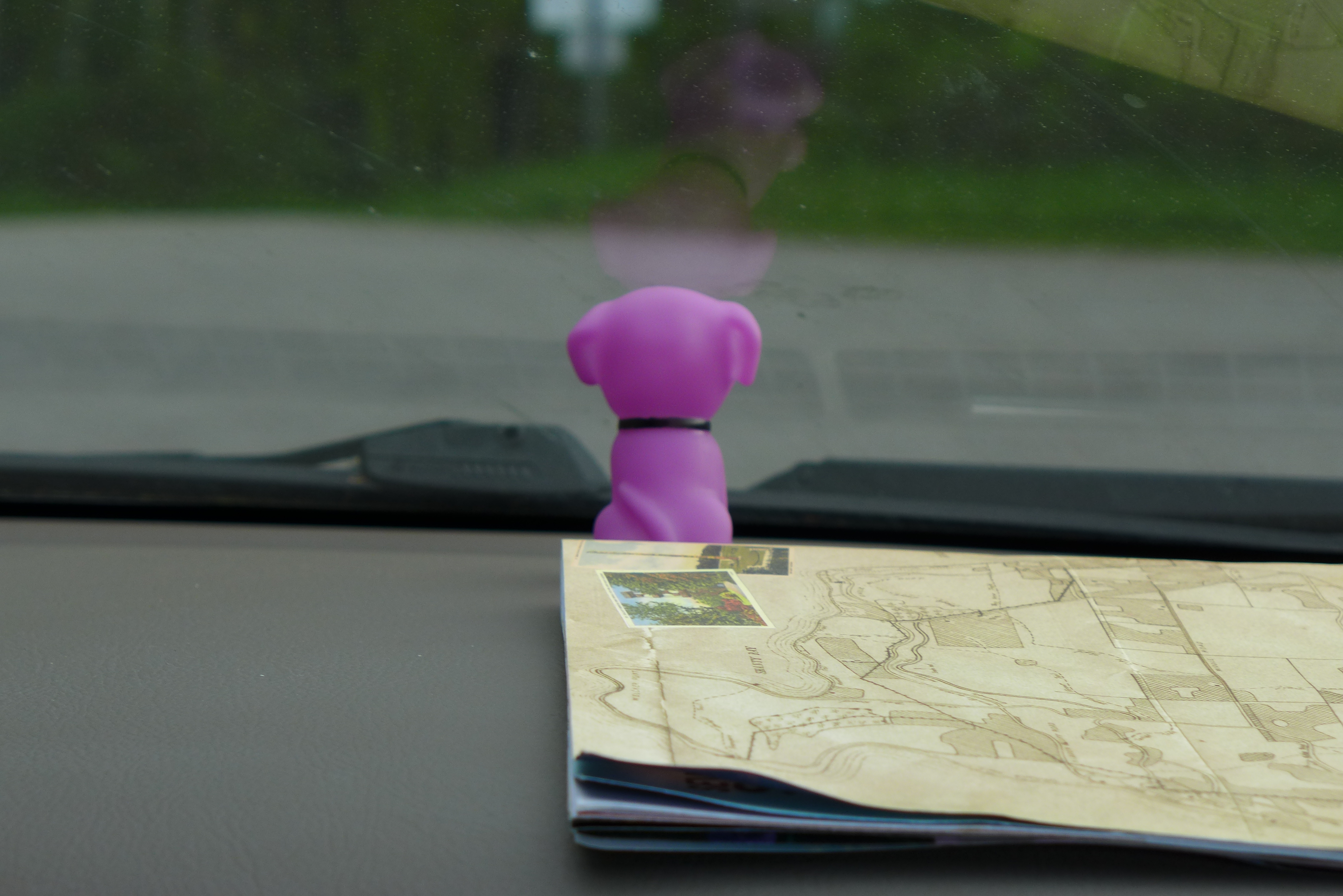 Poochie on dashboard