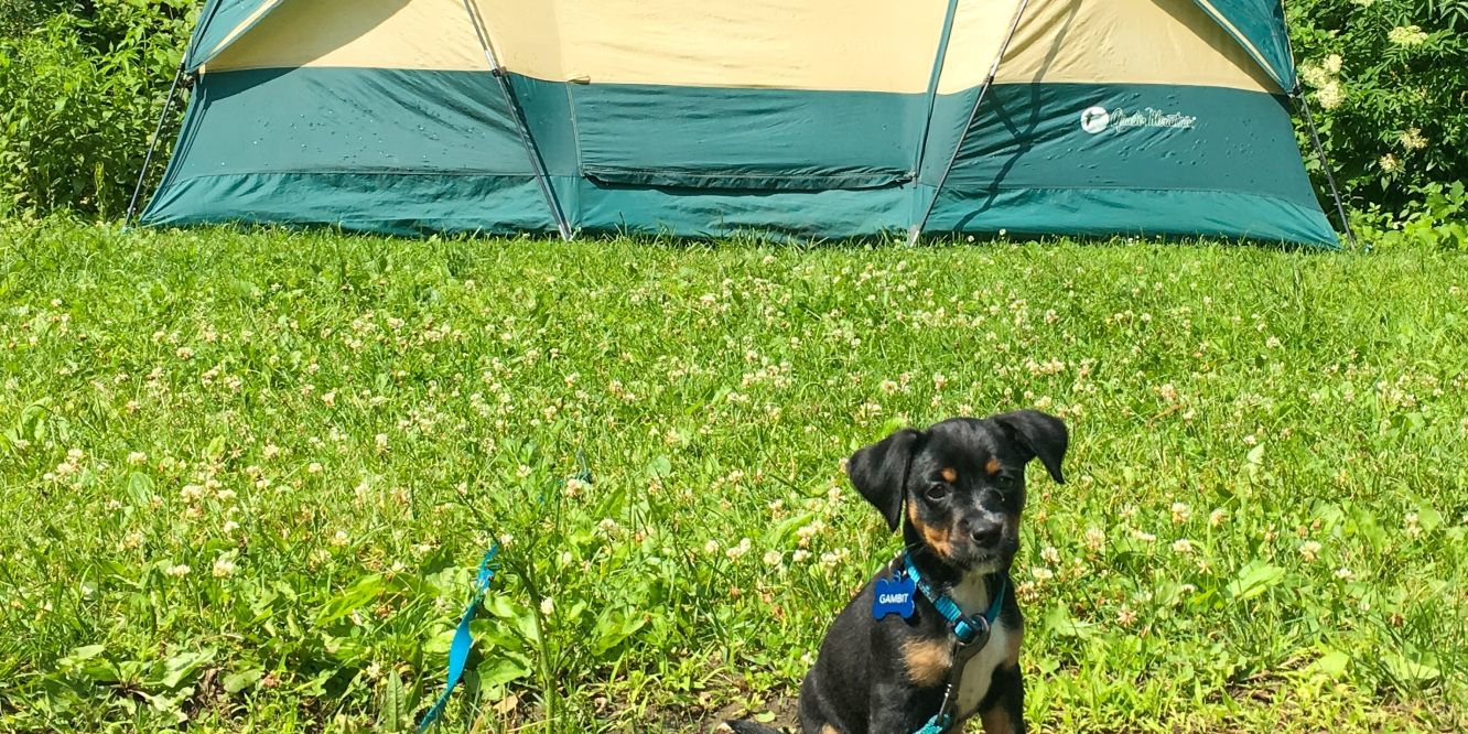 camping with puppy